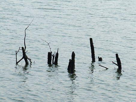 Mangrove, Water, Deadwood