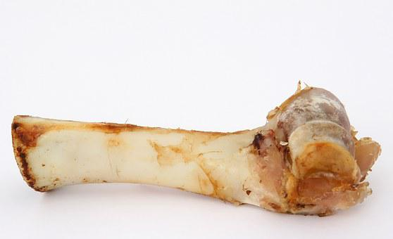 T Bone Gristle, Animal, Beef, Bone, Canine, Chew