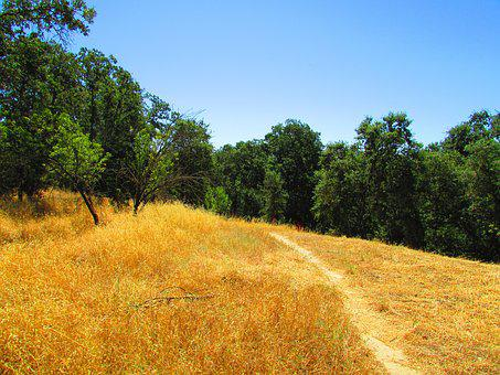 California, Hill, Grass, Hiking, Landscape, Nature