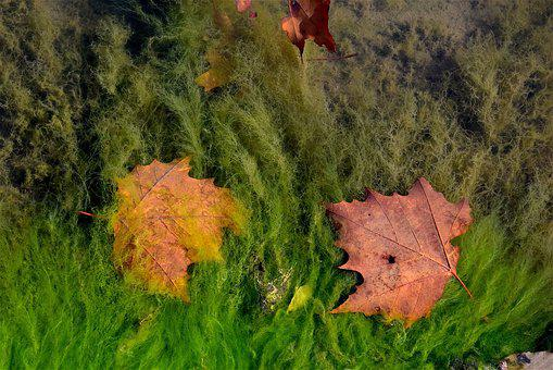 Leaves, Water, Pond, Backdrop, Environment, Fall, Float