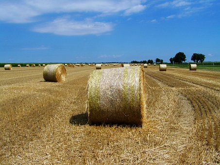 Straw Bales, Stubble, Agriculture, Fileds, Utumn, Dry