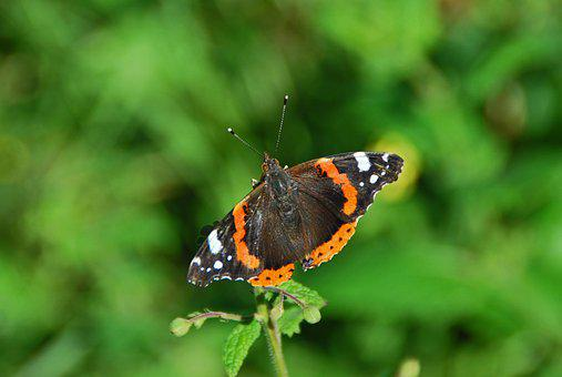Butterfly, Tender, Nature, Insect, Close, Macro, Wing
