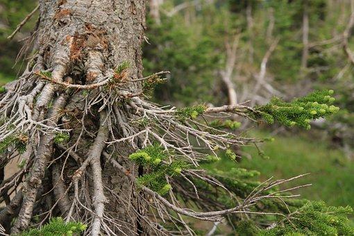 Tree Stump, Nature, Tree, Stump, Wood, Forest, Natural
