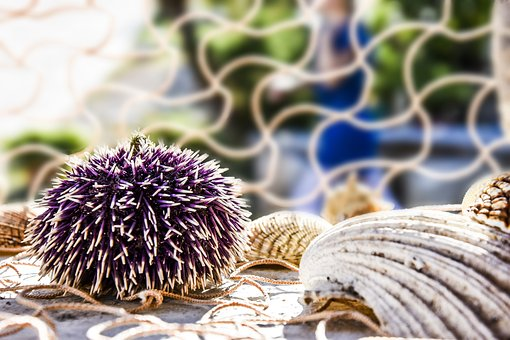 Decoration, Decoration Sea, Urchin, Sea Urchin, Shell