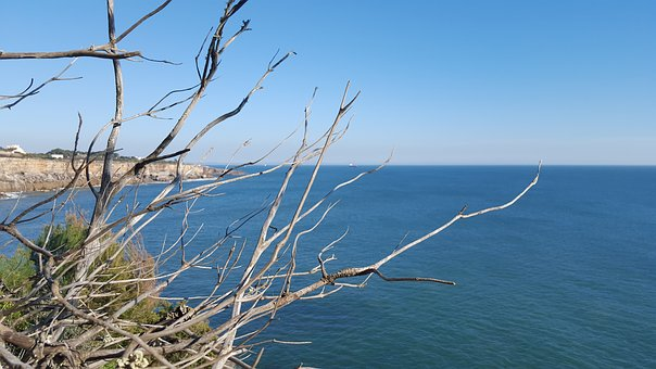 Portugal, Cascais, Atlantic Ocean, Dry, Tree, Branch