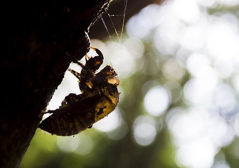 Insect, Nature, Macro, Detail, Cicada, Small Cicada