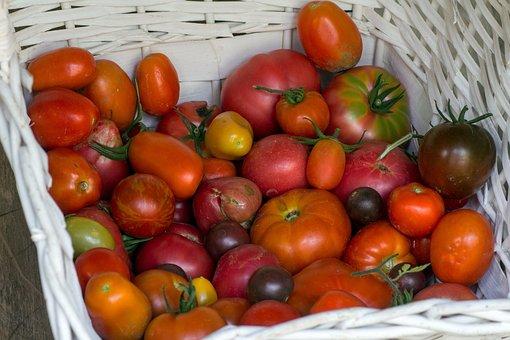 Vegetables, Tomatoes, Basket, Garden Tomato