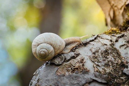 Snail, Creeps, Closeup, Garden, Green, Background