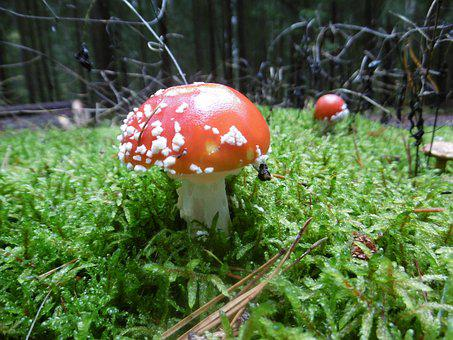 Forest, Mushroom, Autumn, Nature, Toxic, Moss