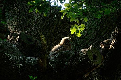 Eagle Owl, Owl, Nest, Bird