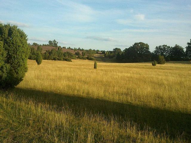 Lünbeburger Heath, Nature, Heide, Landscape, Plant