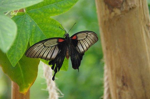 Butterfly, Butterlfy Park, Mariposario De Benalmadena