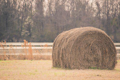Countryside, Farm, Farming, Field, Grass, Hay, Hay Bale
