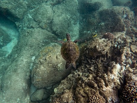 Animals, Coral, Fishes, Ocean, Reef, Rocks, Sea
