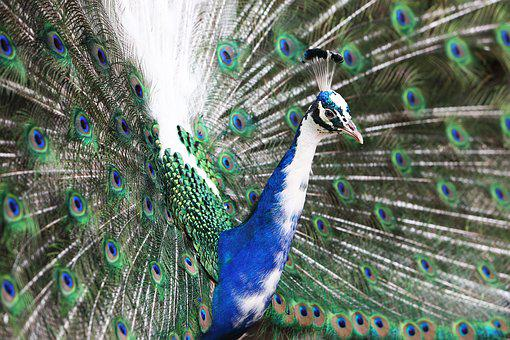 Animal, Animal Photography, Bird, Feathers, Pattern
