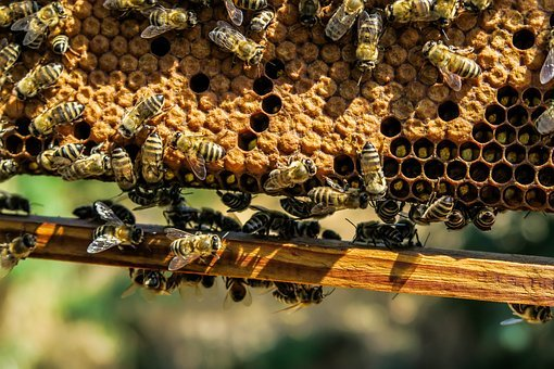 Agriculture, Apiary, Bee, Beehive, Beekeeping, Beeswax