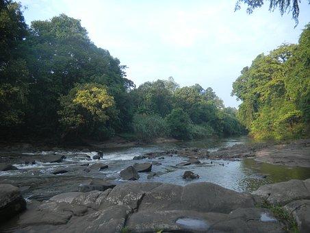 Nature, Kalimantan, Forest, Water, River, Stream, Rocks