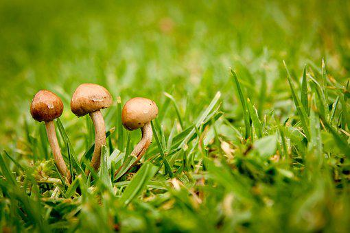 Close-up, Field, Fungus, Grass, Ground, Growth, Lawn