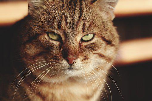 Adorable, Animal, Care, Cat, Close-up, Cute, Domestic