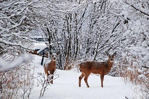 Deer, Snow, Cold, Tree, Forest, Startle