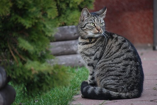 Cat, Kitten, Tomcat, The Seriousness Of, Beast, Animal