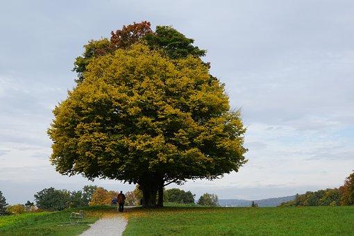 Tree, Autumn, Mood, Leaves In The Autumn, Golden Autumn