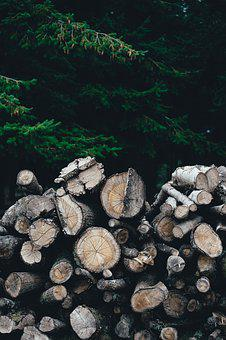 Firewood, Logs, Nature, Pile, Stacked, Trees, Wood