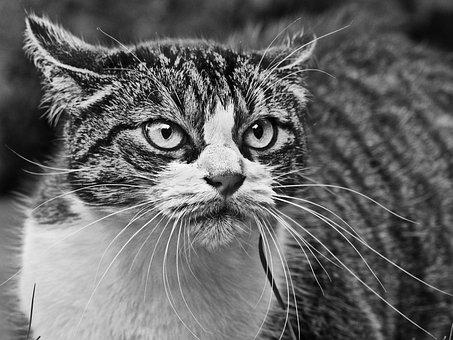 Cat, Angry, Anger, Black And White, Feline, Animal