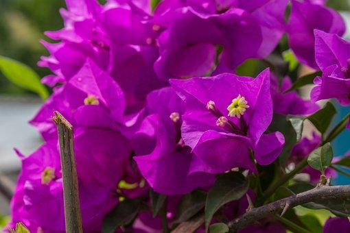 Flower, Color, Nature, Plant, Garden, Colorful