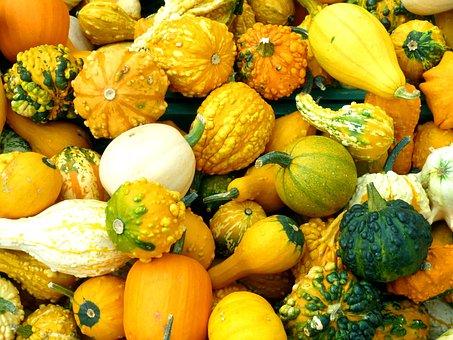 Pumpkins, Cucurbitaceae, Plant, Vegetables, Orange