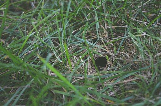 Blur, Close, Close-up, Environment, Field, Focus, Grass