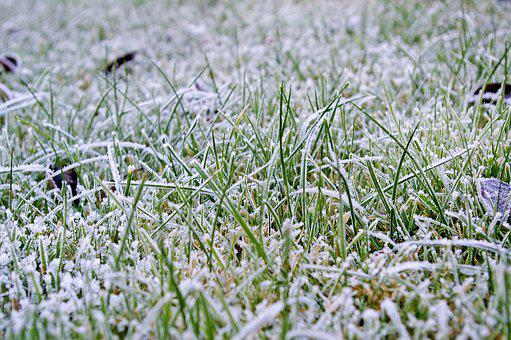 Rush, Lawn Frosty, Meadow, Winter, Frosty, Halme, Grass