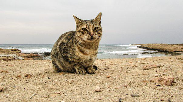 Cat, Stray, Face, Eyes, Portrait, Animal, Homeless