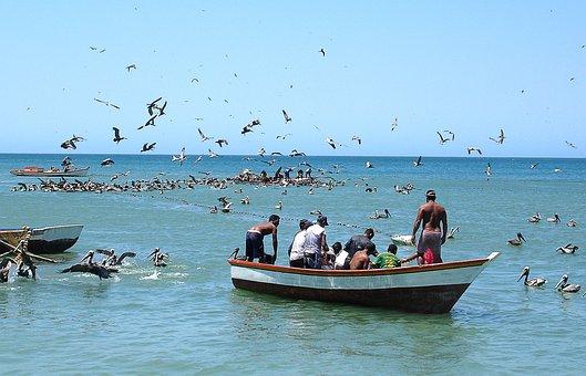 I Boat, Boat, Fishing, Daisy, Bay, Sea, Landscape