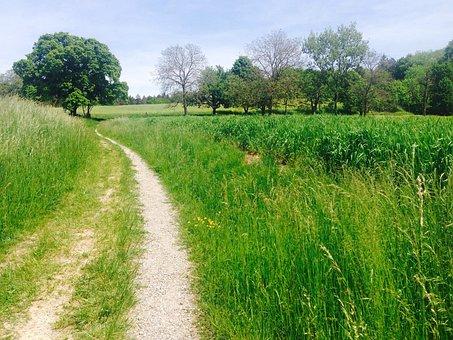 Away, Meadow, Field, Zollikon, Switzerland, Zurich