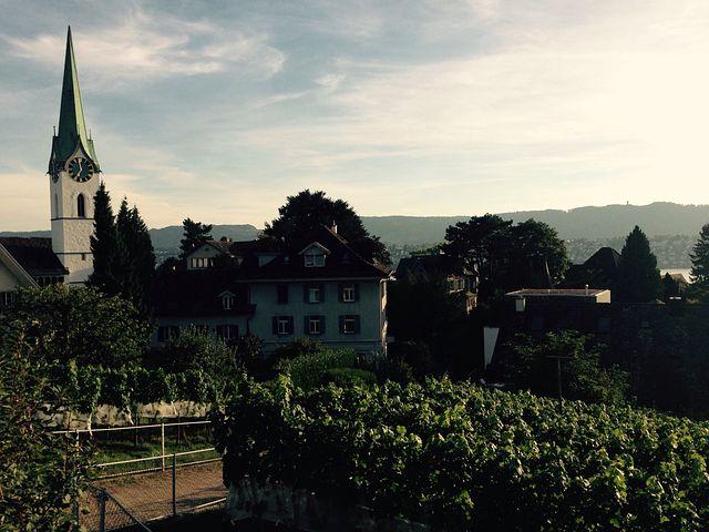 Zurich, Zollikon, Vineyard, Switzerland