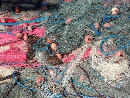 Fishing Nets, Caught, Catch, By Catch, Fang, Fishing