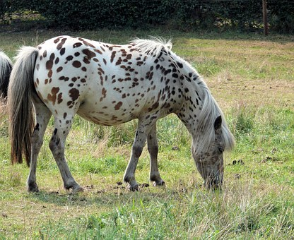 Animal, Horse, Dotty, Countryside, Meadow