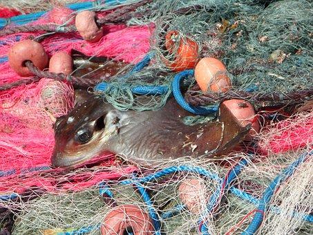 Caught, Network, Fishing Net, Fishing Nets, Fishing