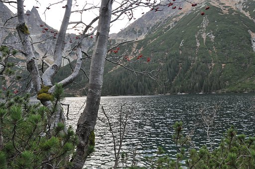 Pond, Mountains, Tree, Branches, View, Vegetation