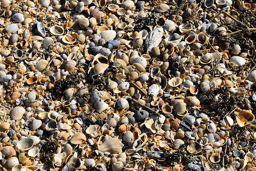 Beach Shells, Background, Backdrop, Pattern, Shapes