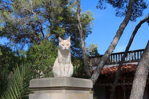 Mallorca, Cat, Domestic Cat, Animal World, South, Pet