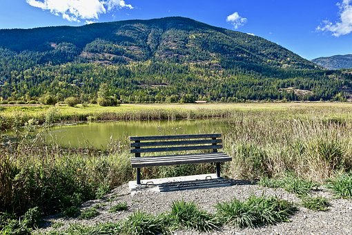 Seat, Bench, Wooden, Peaceful, Tranquil, Seated
