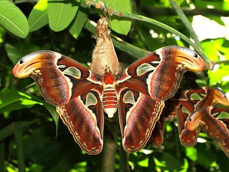 Drexel, Butterfly, Animal
