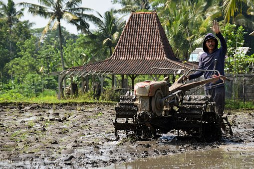 Agriculture, Rice Fields, Bali, Indonesia, Rice