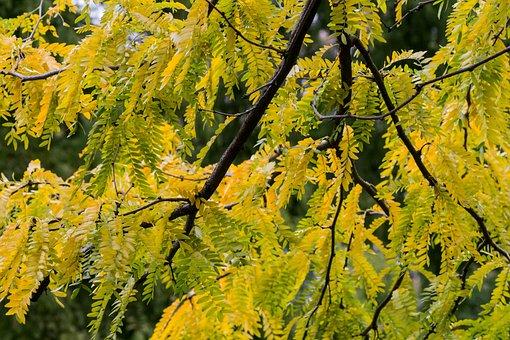 Autumn, Yellow, Leaves, Golden Autumn, Autumn Mood