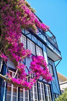 San Fransisco, Usa, California, House, Flowers, Facade