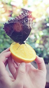 Butterfly, Animals, Nature, Insect, Animal, Wings