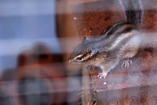 Animal, Squirrel, Stripy, Cage, Pet, Zoo