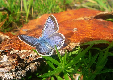 Butterfly, Lycaenidae, Animal, Flying, Insect, Macro